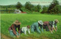 laborers weeding in field