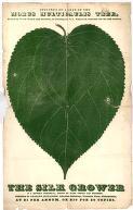 mulberry leaf print